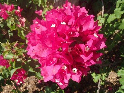 FOTKA - Turecko-kvety z dovolenky
