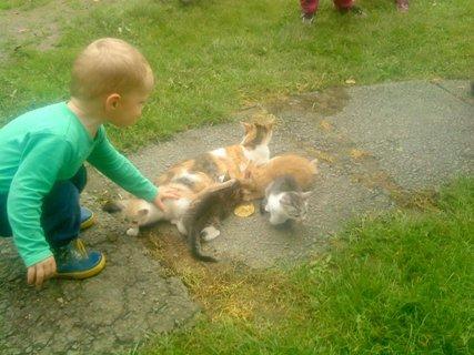 FOTKA - Jakubko a kočičky