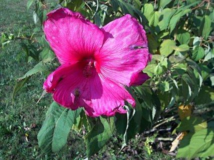 FOTKA - Kvetl venku