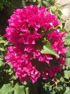 FOTKA - Turecko-krásne kvety boli všade