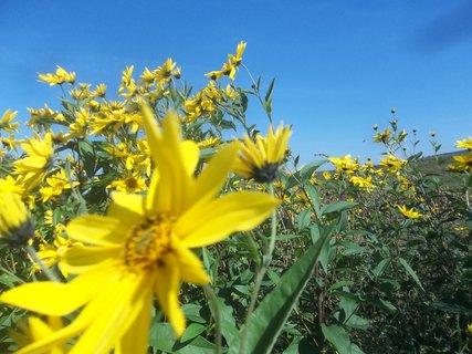 FOTKA - žlutá kvítka