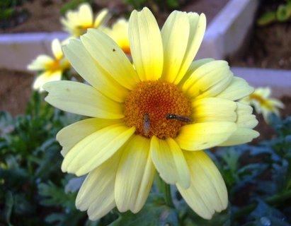 FOTKA - mušky na květu