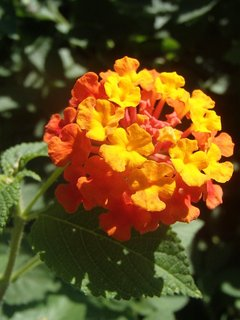 FOTKA - Turecko - kvitli rôznej farby