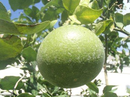 FOTKA - Turecko-�e by pomaran�?