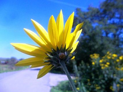 FOTKA - Foceno v září