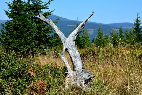 FOTKA - Rašeliniště se nachází přibližně 1 km od lanovky jezdící z Jánských Lázní na vrchol Černé hory a rozkládá se v sedle mezi Černou a Světlou horou při pramenech Černého potoka. Na sušších okrajích roste kleč, na vlhkých místech různé druhy rašeliníků.