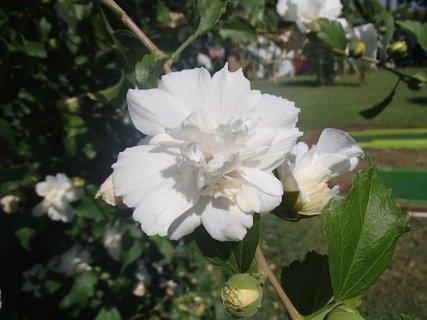 FOTKA - Turecko-kvety zo záhrady