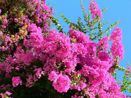 FOTKA - Úžasné květy