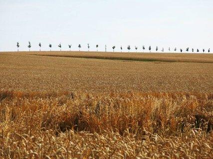 FOTKA - Zlaté pole