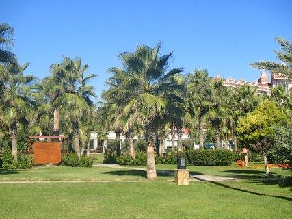 FOTKA - Turecko-zelené palmy