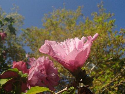 FOTKA - Turecko-bledoružový kvet