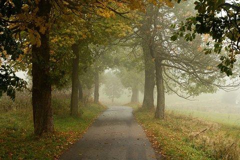 FOTKA - Mlha v Zákoutí