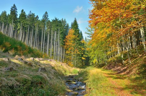 FOTKA - Barevný podzim v Beskydech