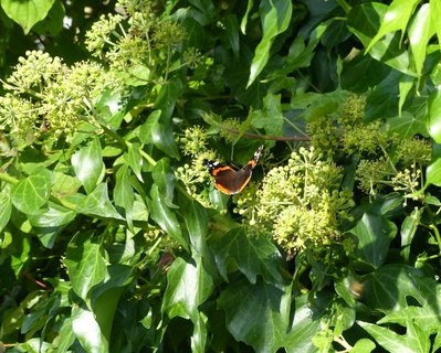 FOTKA - na kvetu brectanu