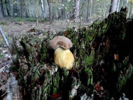 FOTKA - Kde všude nerostou houbičky.