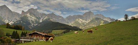 FOTKA - Znovu na Postalm - Krávy na pastvě