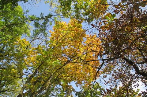 FOTKA - Pohled do korun  strom�