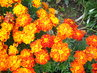 Kvetou pořád
