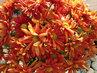 kytice chryzantem