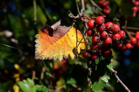 FOTKA - Podzimní zastavení