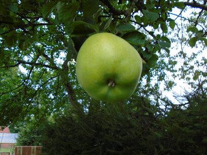 FOTKA - jablko