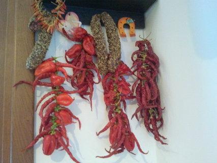 FOTKA - uzitna:-) dekorace v kuchyni. skoda ze nevydrzi dlouho:-)