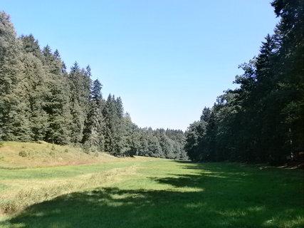 FOTKA - stíny lesa