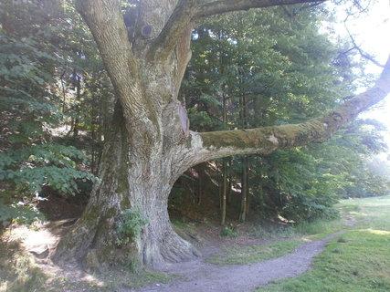FOTKA - větví ukazuje cestu