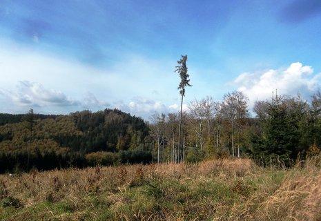 FOTKA - dnes  v lese na Bunči