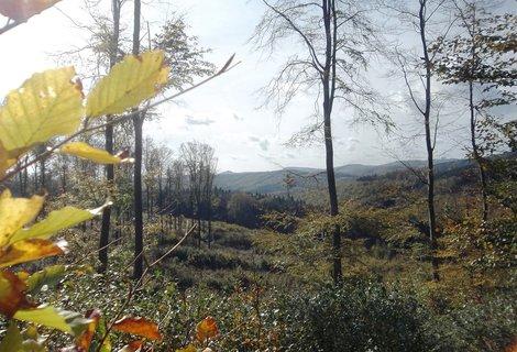 FOTKA - Bunč je v Chřibech