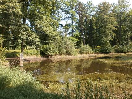 FOTKA - kvetoucí rybník u tvrze Cuknštejn