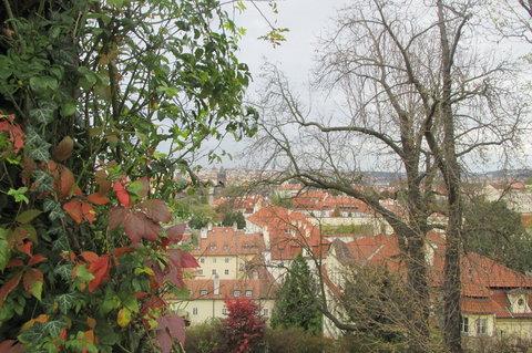 FOTKA - Svatováclavská  vinice -  výhled přes barevné listí