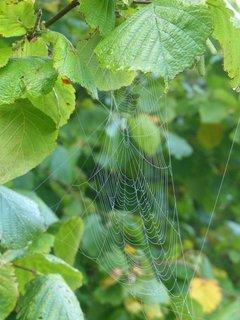 FOTKA - pavucinka na lisce