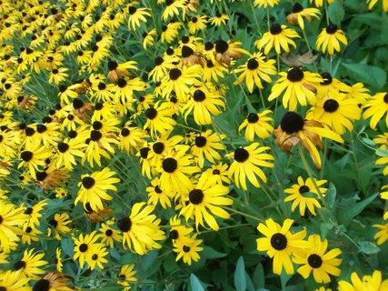 FOTKA - Kvetly v září