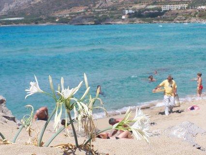 FOTKA - Pláž s květinou