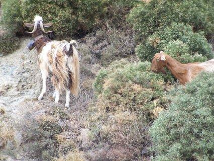 FOTKA - Kozy v horách