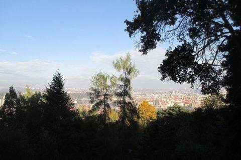 FOTKA - Krajka z porostu stromů