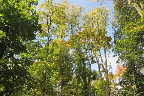 FOTKA - Prosluněné stromy