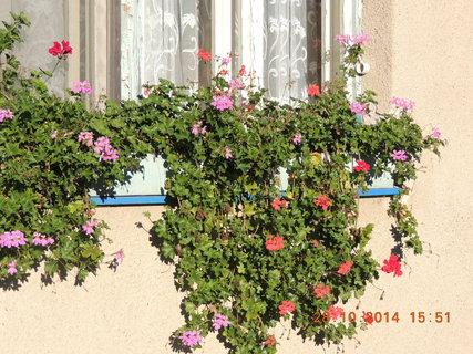 FOTKA - Muškáty na okně od ložnice 28.10. 2014