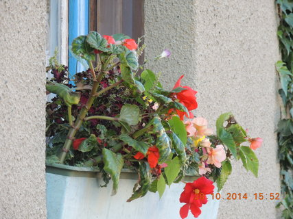 FOTKA - Truhlík na kuchyňském okně