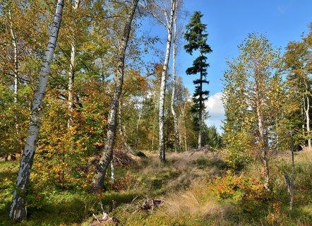 FOTKA - V pohádkovém lese