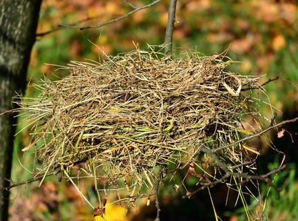FOTKA - tak to vypadá když děti vylítnou z hnízda :-)