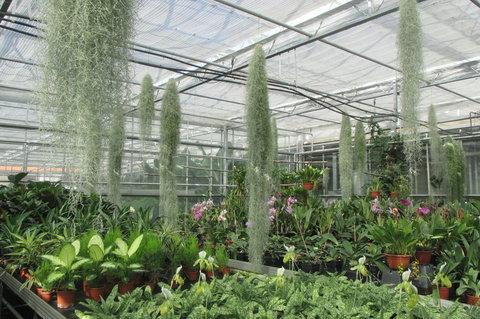 FOTKA - Upomínka na akce : Produkční zahrady