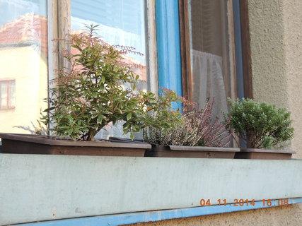 FOTKA - Zimní truhlík na kuchyňském okně 4.11.2014