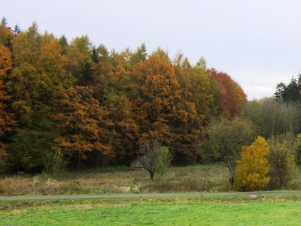 FOTKA - Podzimní les