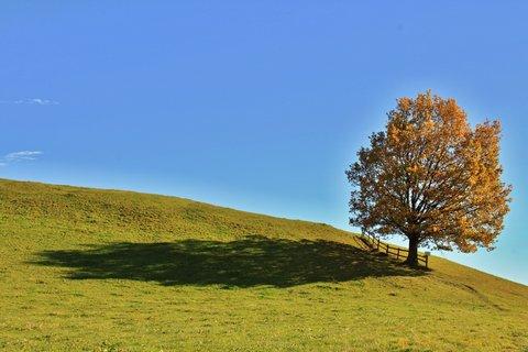FOTKA - Vyhlídka Kühbühel a Ritzensee - Strom a jeho stín