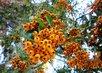 oranžové z parku