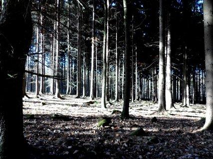 FOTKA - Podzimní les prozářený sluníčkem