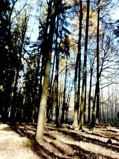 FOTKA - Procházka podzimím lesem