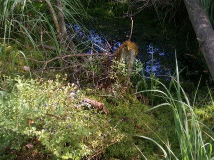 FOTKA - borůvky lákají do bažiny